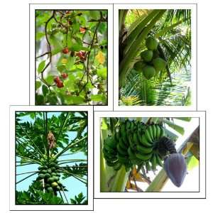 Tropical Fruit Tree Note Cards Exotic Plants Photography Maui Hawaii