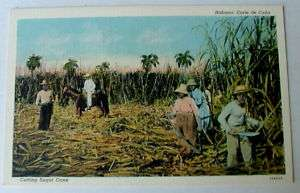 HAVANA CUBA POSTCARD PEOPLE CUTTING SUGAR CANE