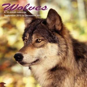 2011 Animal Calendars Wolves   16 Month   30x30cm